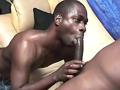 Black homo devotees in naughty anal fest